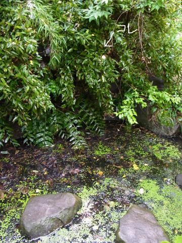 池の上に発見