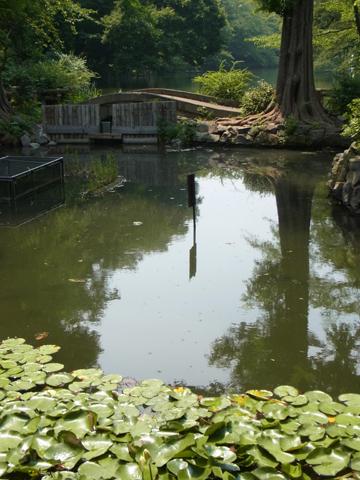 井の頭池東端ひょうたん橋付近