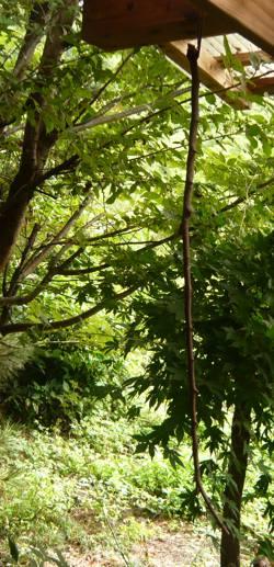 デッキの枝