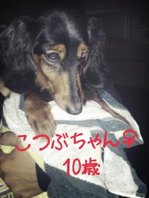 2013-11-11-15-26-39_deco_201311200812436e4.jpg