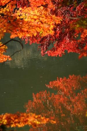 薬師池公園の紅葉 B