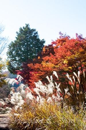 嵐山渓谷の紅葉 L