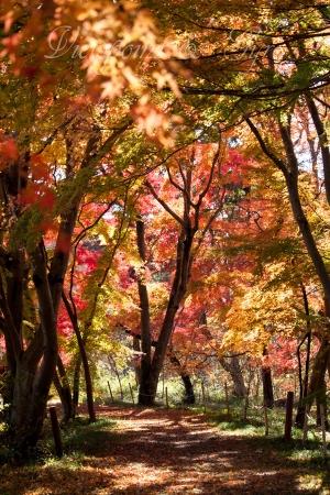 嵐山渓谷の紅葉 M