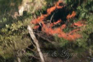 嵐山渓谷の紅葉 C