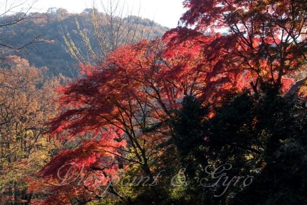 嵐山渓谷の紅葉 A