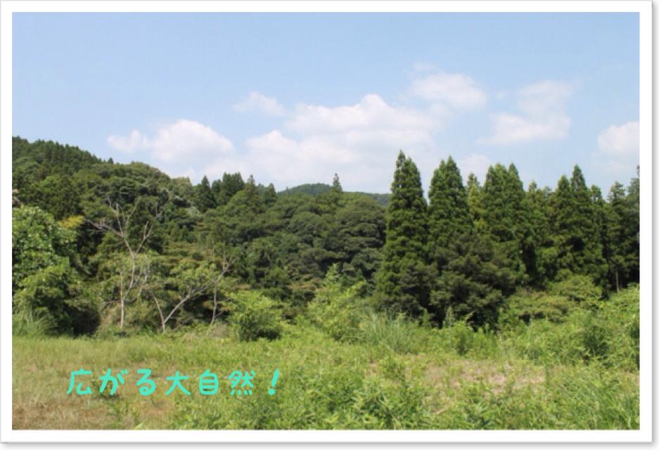 Photo_2013_08_16_17_22.jpg