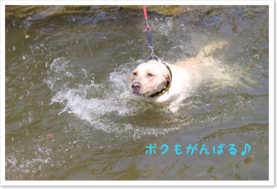 Photo_2013_08_16_18_05.jpg