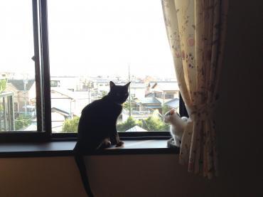 窓辺20130920