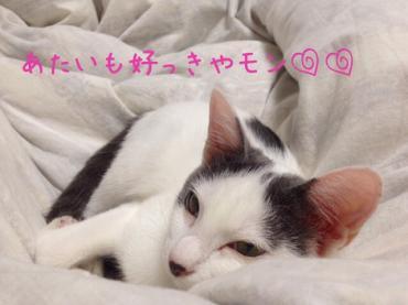 ぬくぬくまいう20131020
