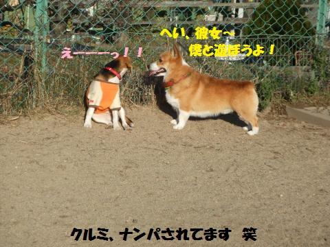 016_convert_20131211062850.jpg
