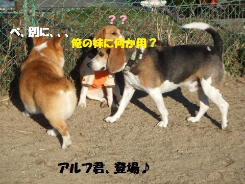 018_convert_20131211062745.jpg