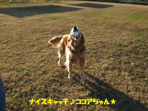 048_convert_20131211063644.jpg