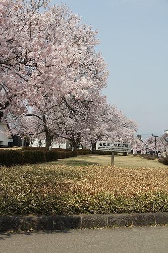 若松三の丸お堀跡の満開の桜