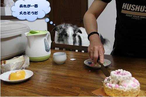プルーム ケーキ