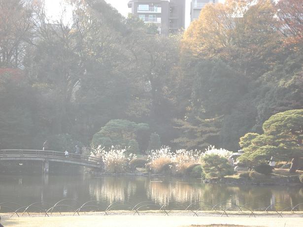 新宿御苑5