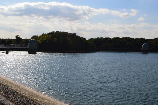 11月の多摩湖5