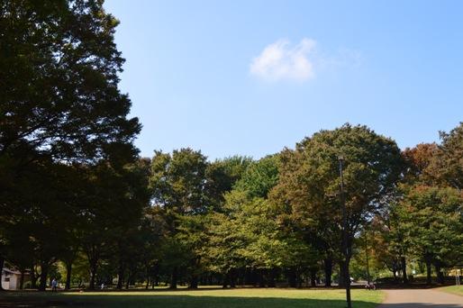 10月の小金井公園