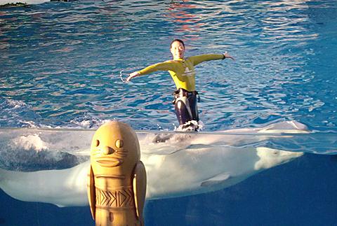 白イルカ2