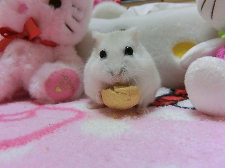クッキーでしゅ~!