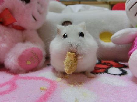 立て食べ~
