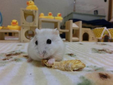 パイナップルでしゅ~