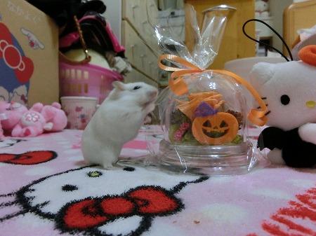 ハロウィン13