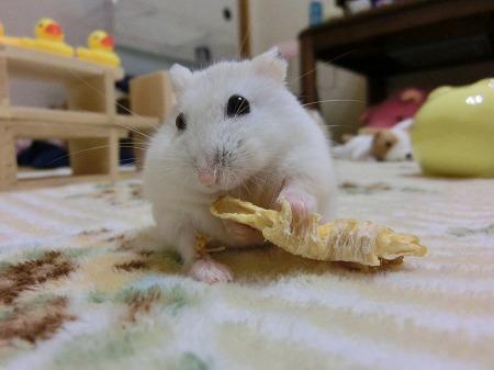 パイナップルの日なんでしゅ!