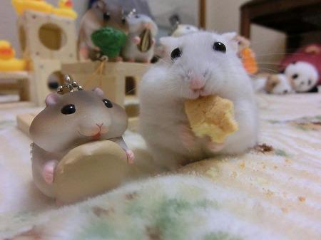 はい、チーズでしゅ!
