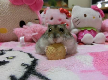 大きなクッキー!