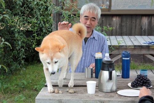 コスモス祭りの吾郎 (2)