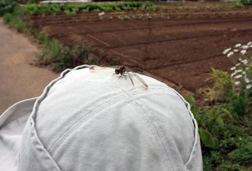 コスモス祭りで虫を撮る (5)