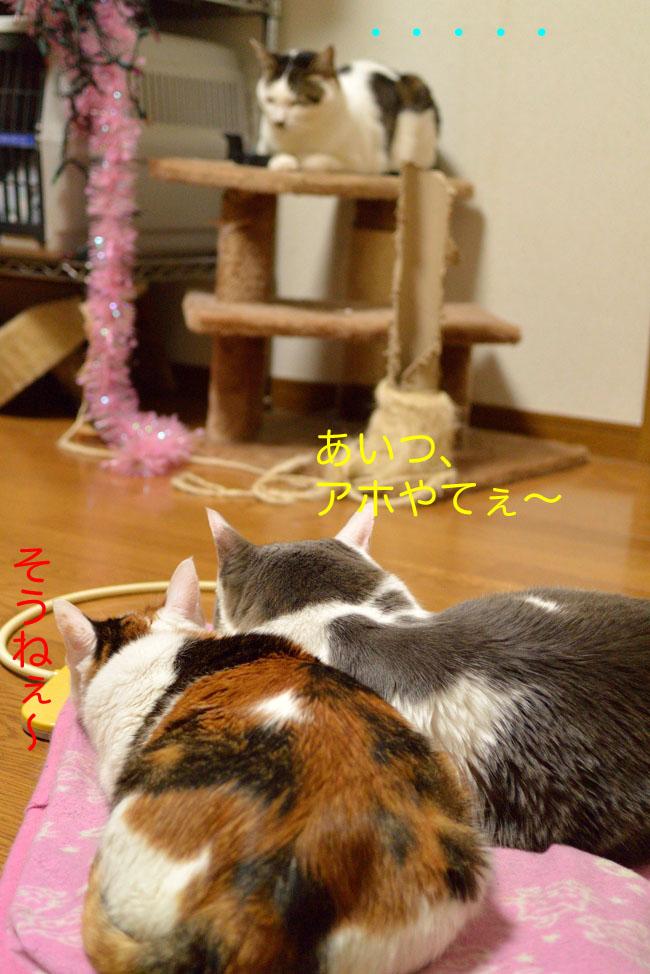 猫たちv04ブログ