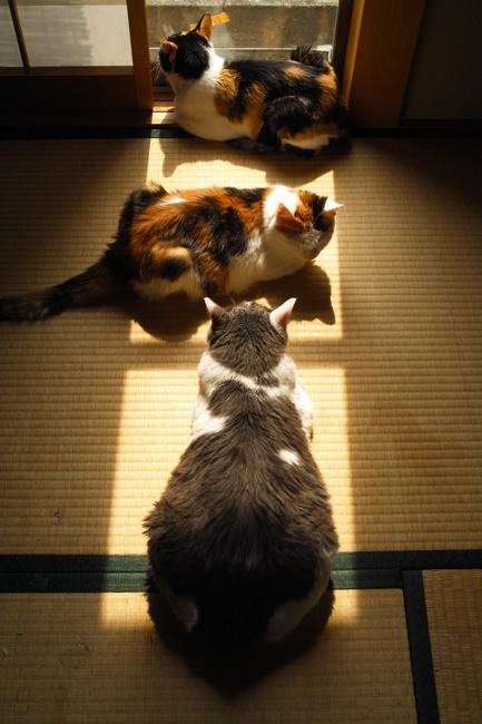 日光浴ネコちゃんx01ブログ