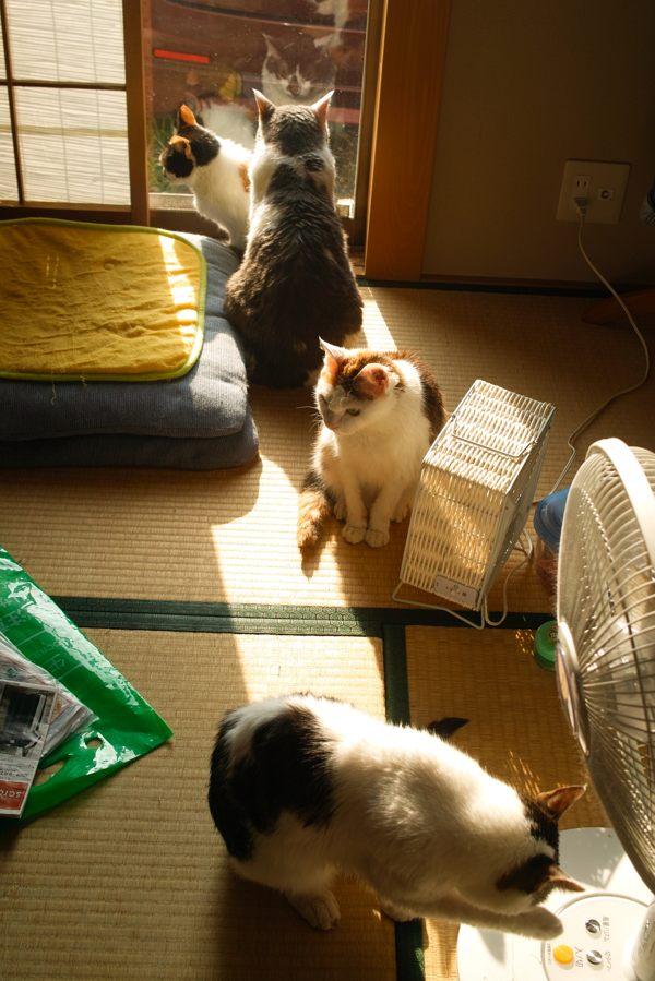 風呂上がりのネコちゃんたちx01ブログ