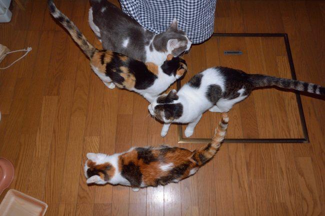 食事を待つ猫たちv02ブログ