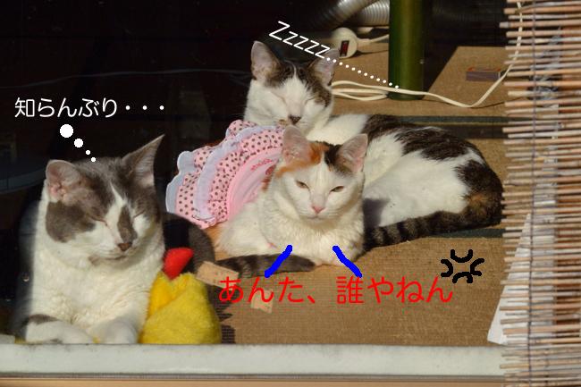 日光浴ネコたちv03ブログ