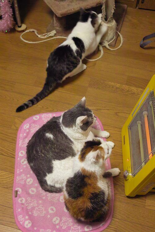 猫たちx01ブログ