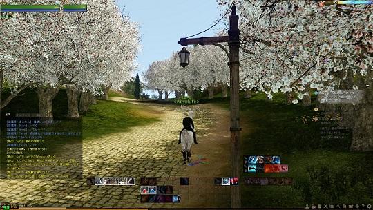 AA桜並木