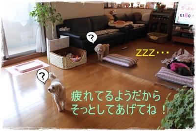 2013_0408_144530-IMG_9676.jpg