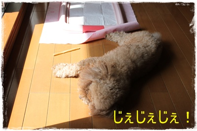 2013_0416_102236-IMG_9726.jpg