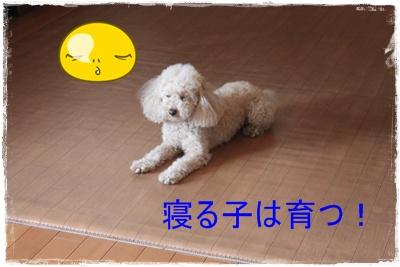 2013_0416_102857-IMG_9728.jpg