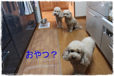 2013_0416_120602-IMG_9747.jpg
