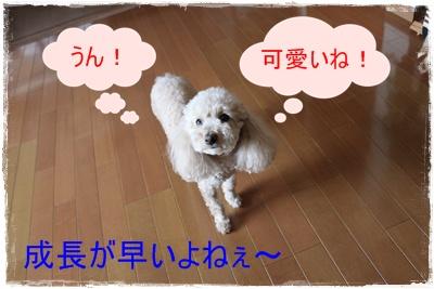 2013_0513_115922-IMG_0063.jpg