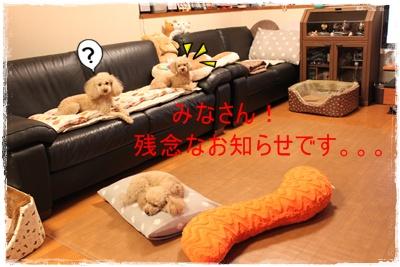 2013_0521_230214-IMG_0118.jpg