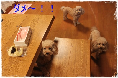 2013_1007_192040-IMG_1339.jpg