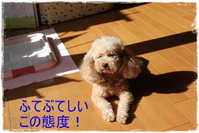2013_1017_102448-IMG_1348.jpg