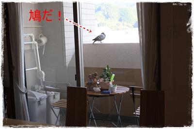2013_1027_163949-IMG_1411.jpg