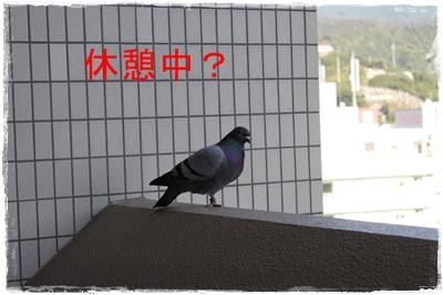 2013_1027_164018-IMG_1413.jpg