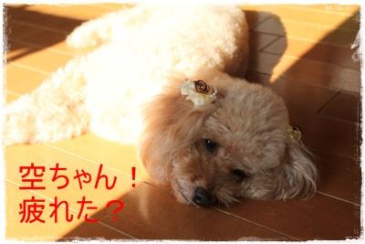 2013_1030_100448-IMG_1442.jpg