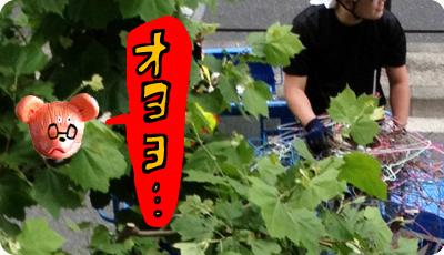 2013_0528_03.jpg
